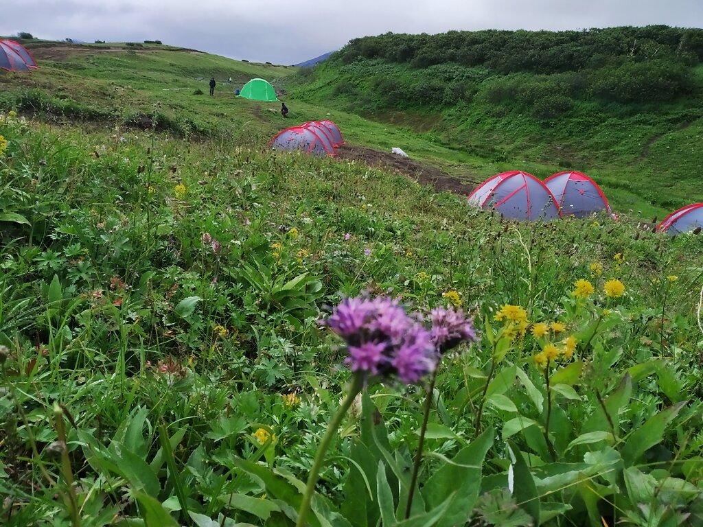 Цветущая и влажная поляна